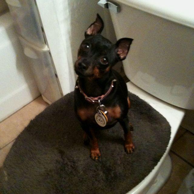 Doggy Bathroom An Indoor Potty Solution For Small Dogs Indoor Dog Potty Dog Bathroom Dog Potty Diy