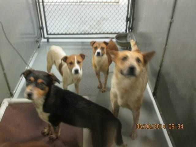Share Us Please Transport Help Needed Nc Va Pa Nj Ny Sat 6 7 Please Email Transportteam Acdra Org With Your Contac Homeless Pets The Fosters Dog Love