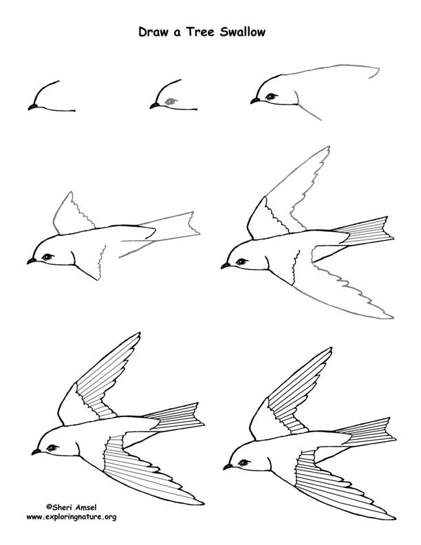 how to draw a tree swallow step by step art