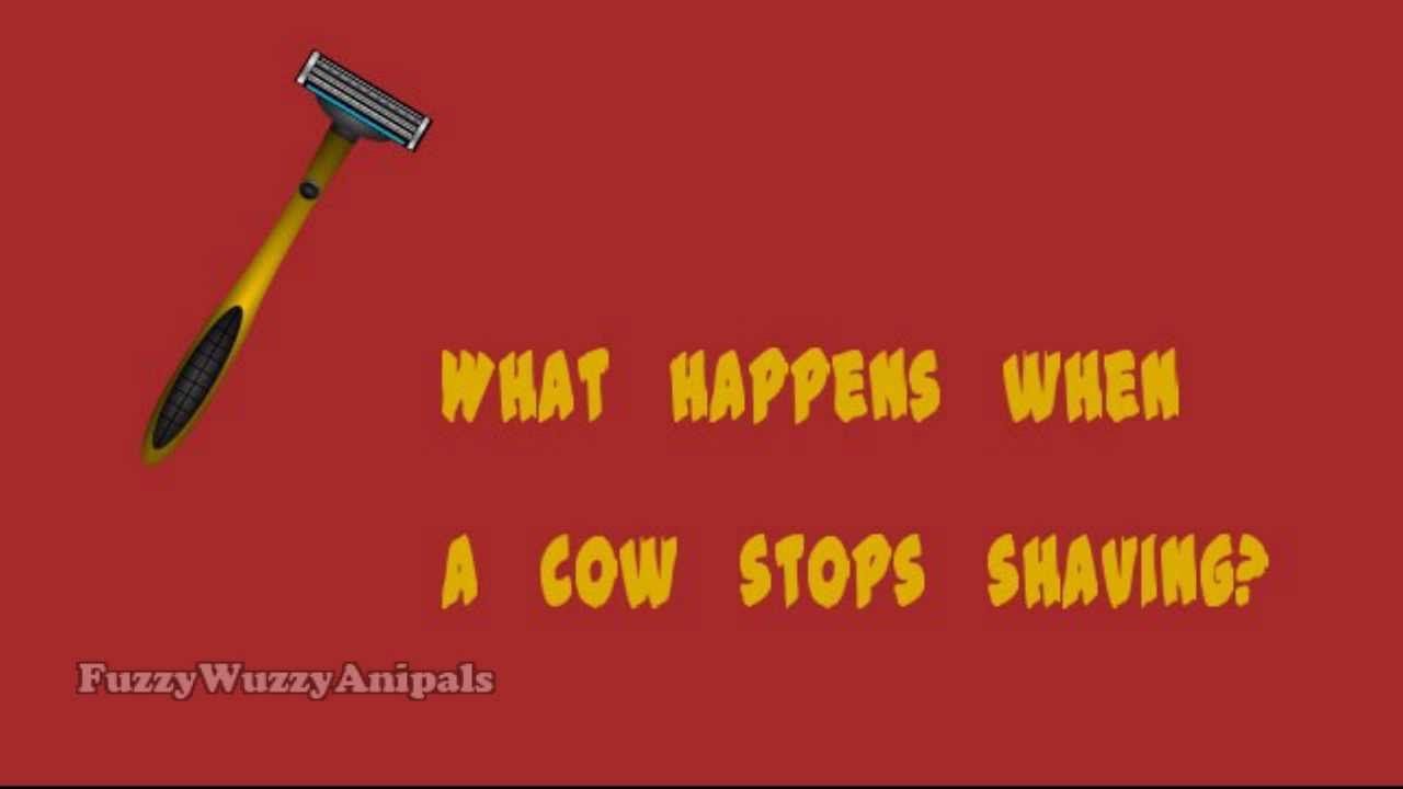 A cow joke for kids. Made with VideoScribe.