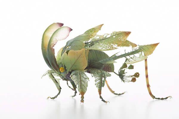 Liliopsidea Insecta, el insecto Flor. 710268f8845b126afca112d1162c8f80