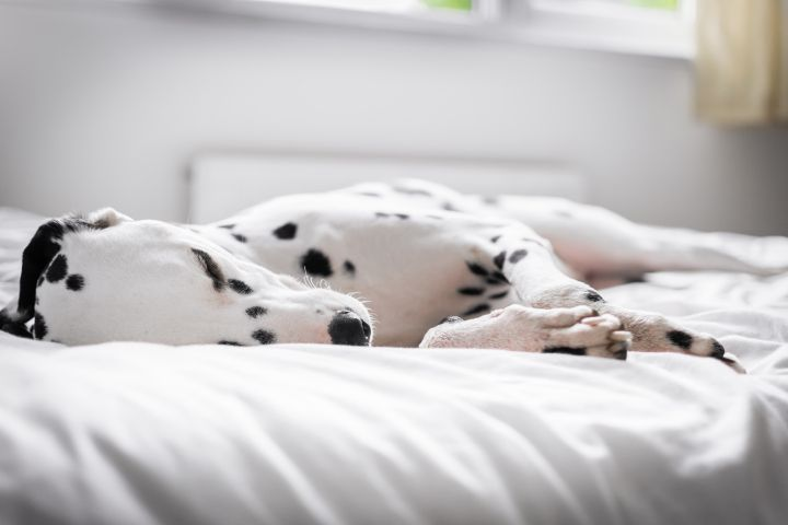 Here S Why Sleeping With Your Dog Is Actually Good For You Sleeping Dogs Your Dog Dog Bedroom
