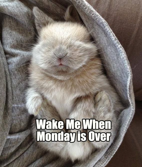 Image result for monday bunny