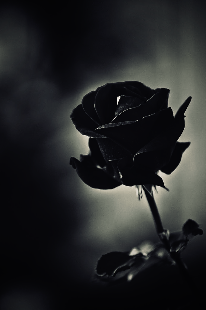 Names Give Things Form Form Gives Things Meaning When We Fail To Embrace Our Purpose We Abandon Our Position In 2020 Black Roses Wallpaper Black Rose Rose Wallpaper