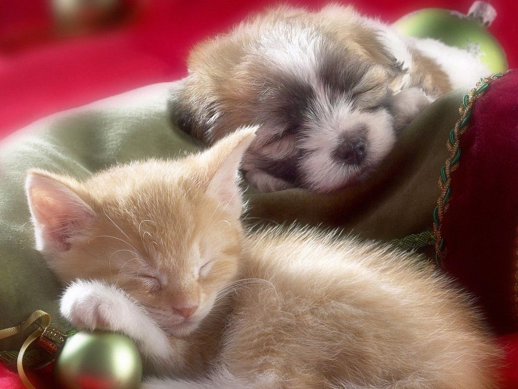 Cat and dog pictures cats pictures cute kitten cute kittens