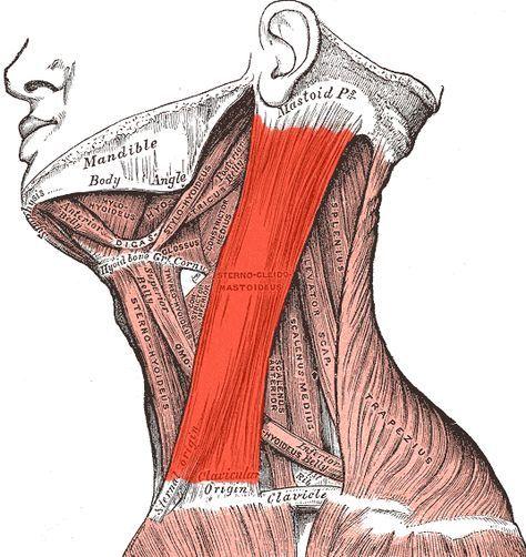 3 modi provati Per risolvere il  dolore al collo e alla spalla (e forse mal di testa)