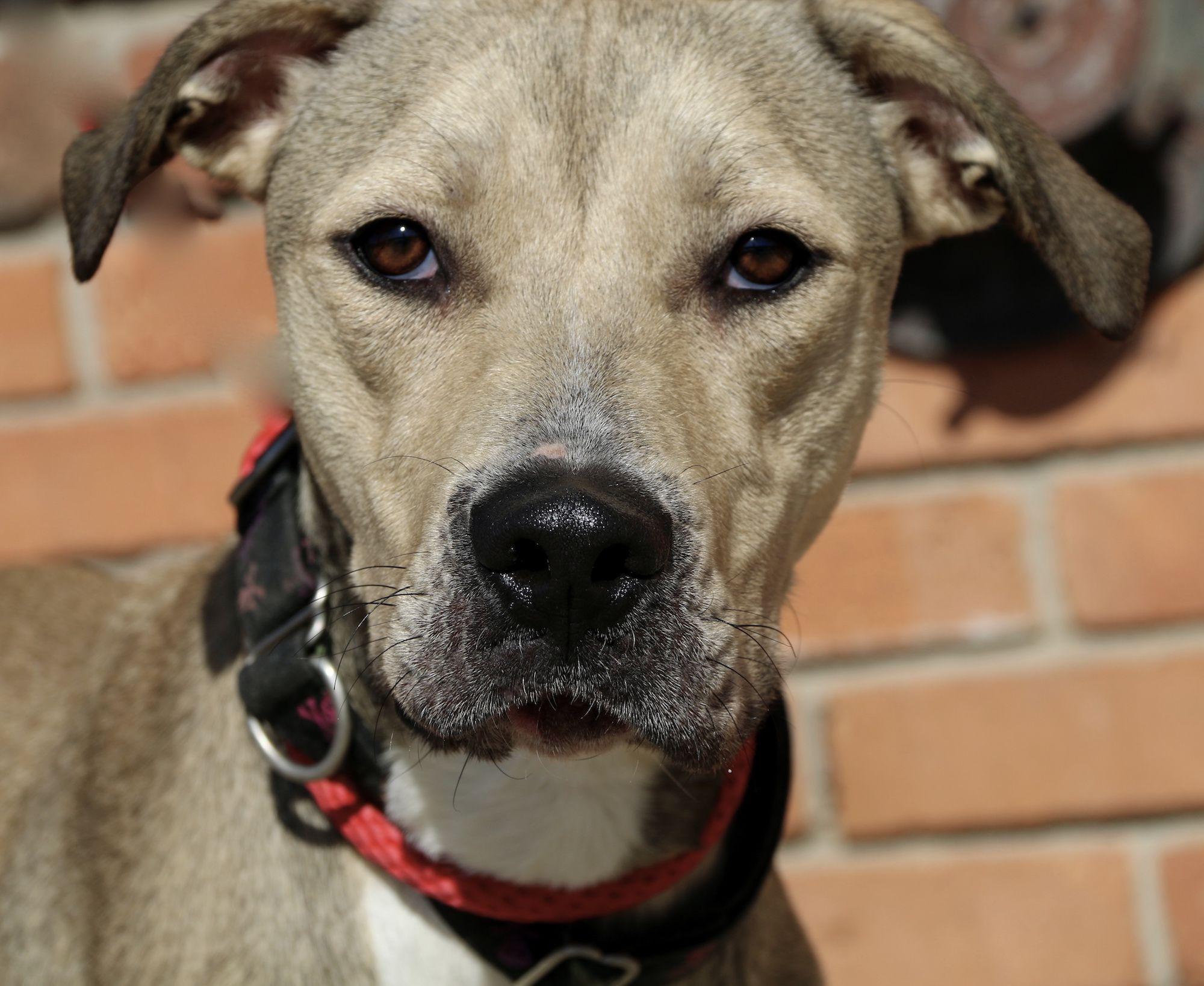 Kirby Villalobos Rescue Center Pitbulls Kinds Of Dogs Pets