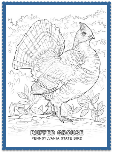 Pennsylvania State Bird Coloring Page   Print Or Color Online   Ruffed  Grouse