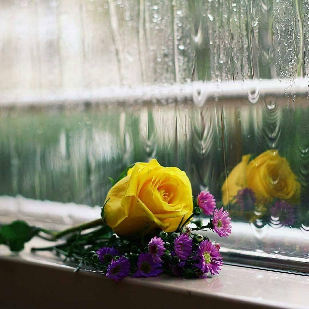 انصتوا لـ صوت المطر وابعثوا ما في خواطركم للسماء فـ أبوابها مفتوحة تنتظر دعاء وبكاء ورجاء ففي وقت نزول المطر دعوات لا Flower Aesthetic Daisy Flower Flowers