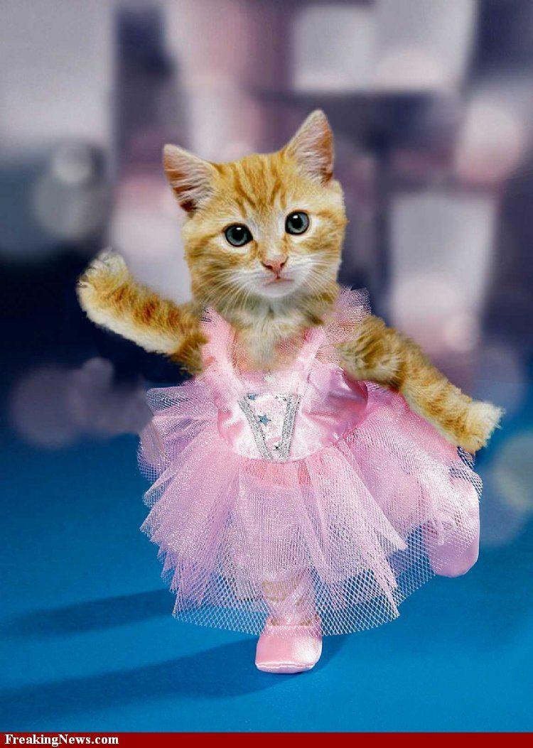 Ballerina Kitten So Campe Dancing Animals Cute Cats Funny Animals