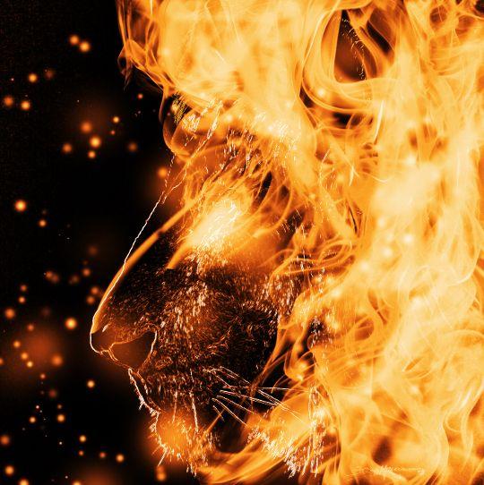 Lion Fire Manipulation Fire Lion Lion Wallpaper Fire Art