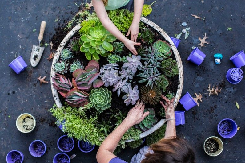 The Plant Hunter - How To Make A Succulent Garden