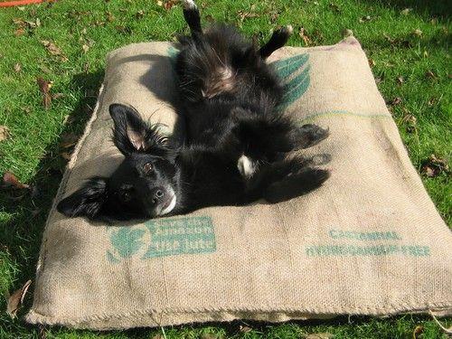 hundebett aus kaffeesack von corinna dogs pinterest. Black Bedroom Furniture Sets. Home Design Ideas