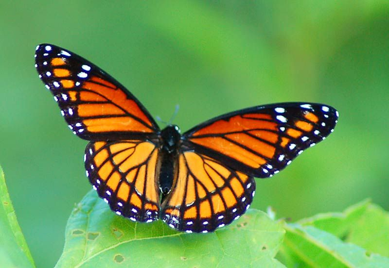Make Butterfly Memories With Images Butterfly Pictures