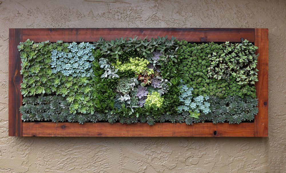 Succulent living wall backyard paradise 2 for Indoor succulent wall