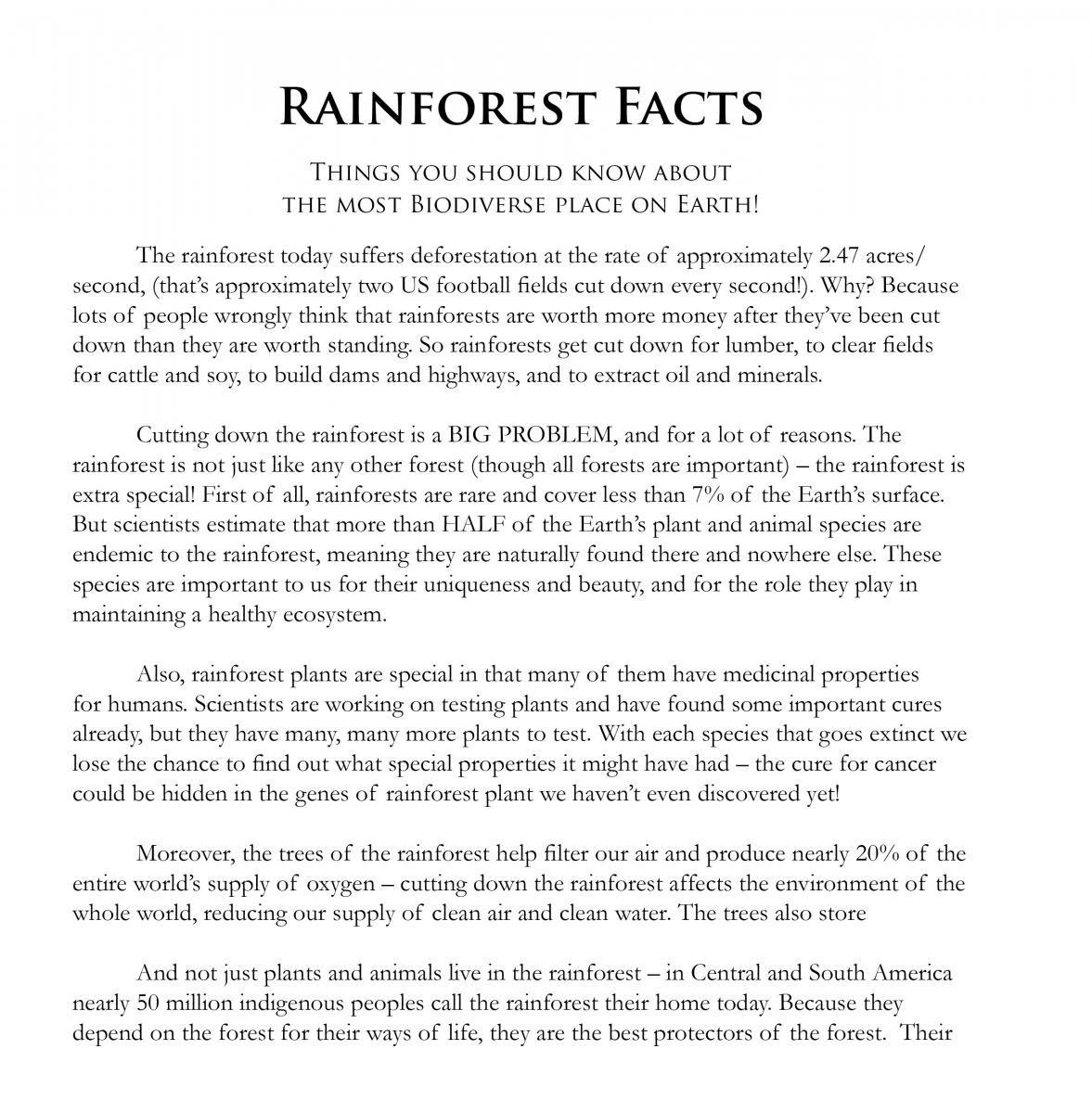 Rainforest Games And Worksheet Activities