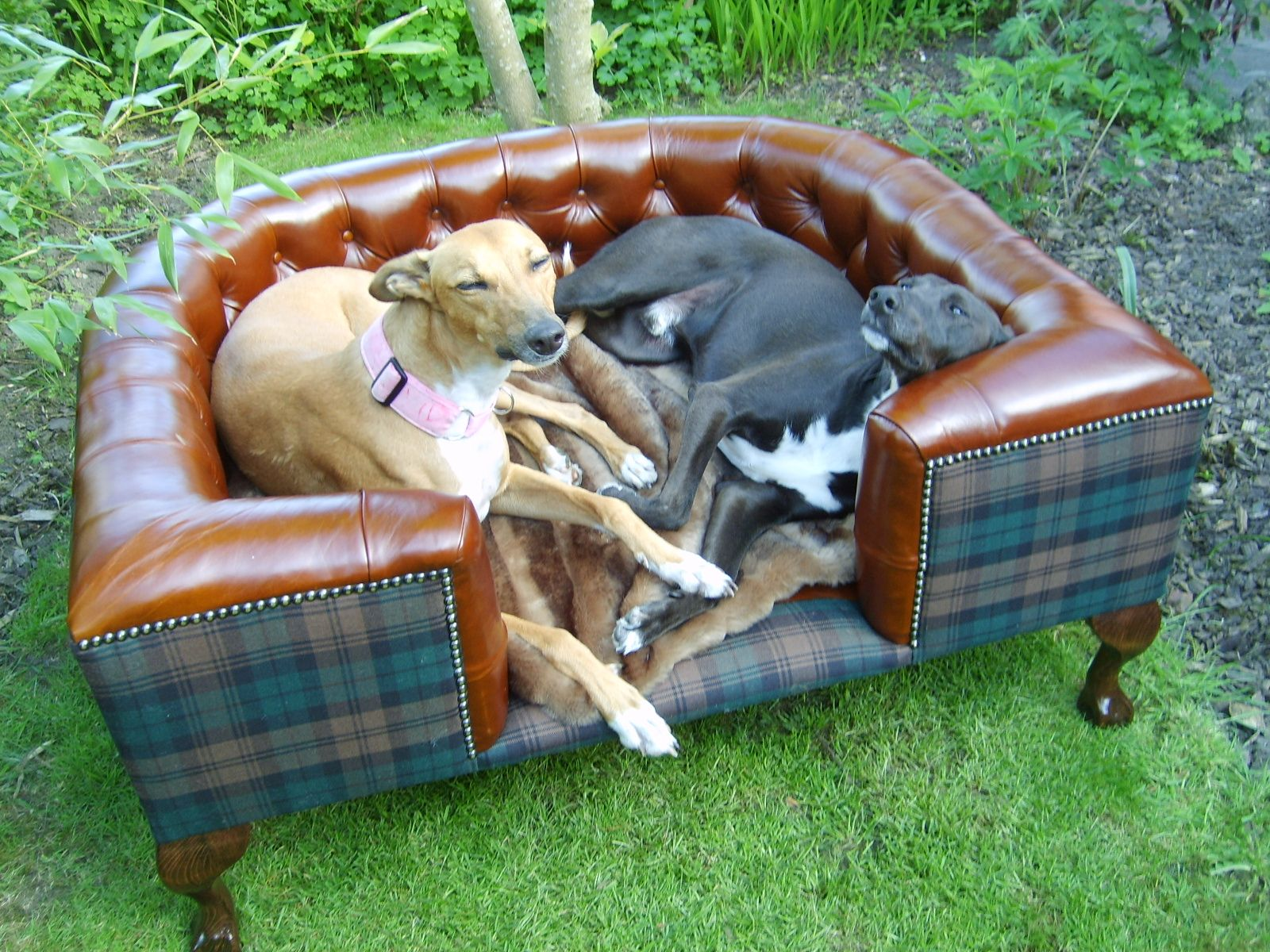 Bolsover And Tartan Luxury Leather Dog Bed Www Pinkwhiskers Co Uk Lurchers Not Included Pet Beds Leather Dog Bed Whippet Dog