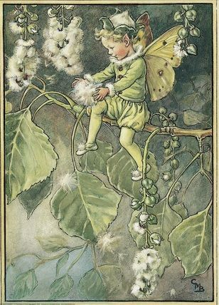 Elves Faeries Gnomes:  #Faery ~ Illustration for the Poplar Fairy.