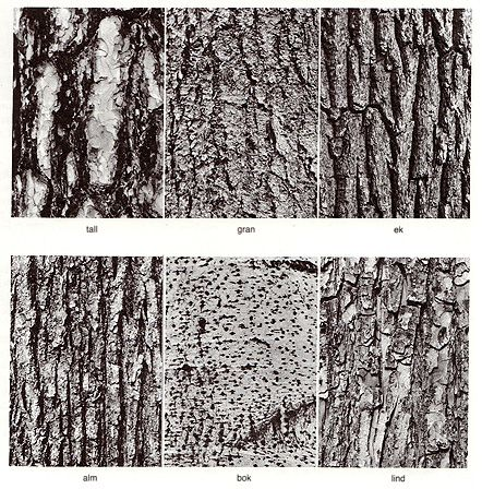 Tree Bark Identification Tree Bark Identification Tree