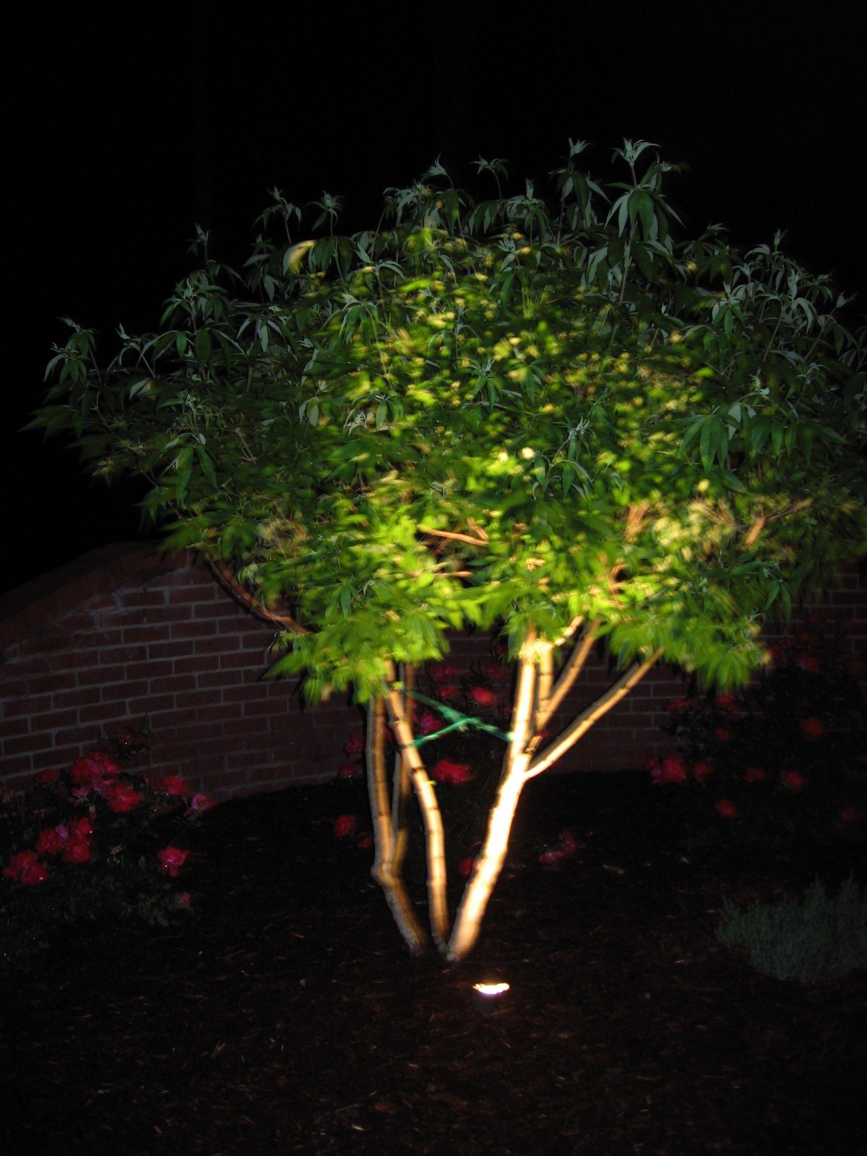uplit tree instead of twinkle lights since you like some