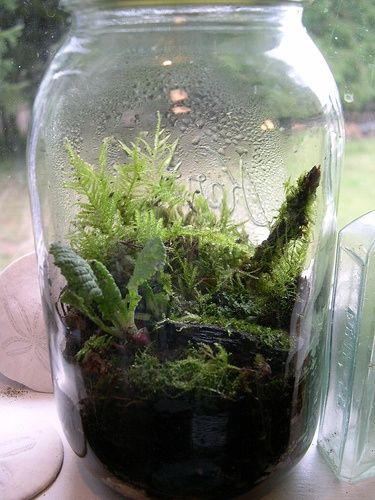 Pin By Teresa Gorney On Life Science Pinterest Terrarium Diy