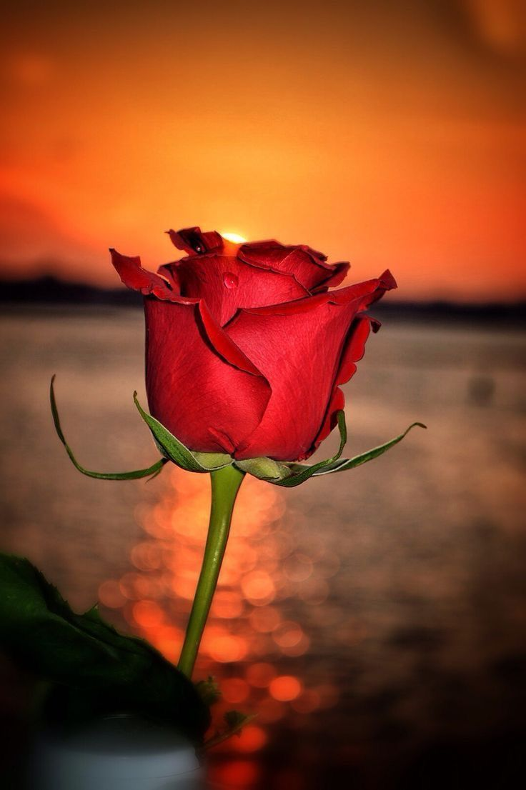 Sunset Rose Perfect Combination Red In 2018 Pinterest Red