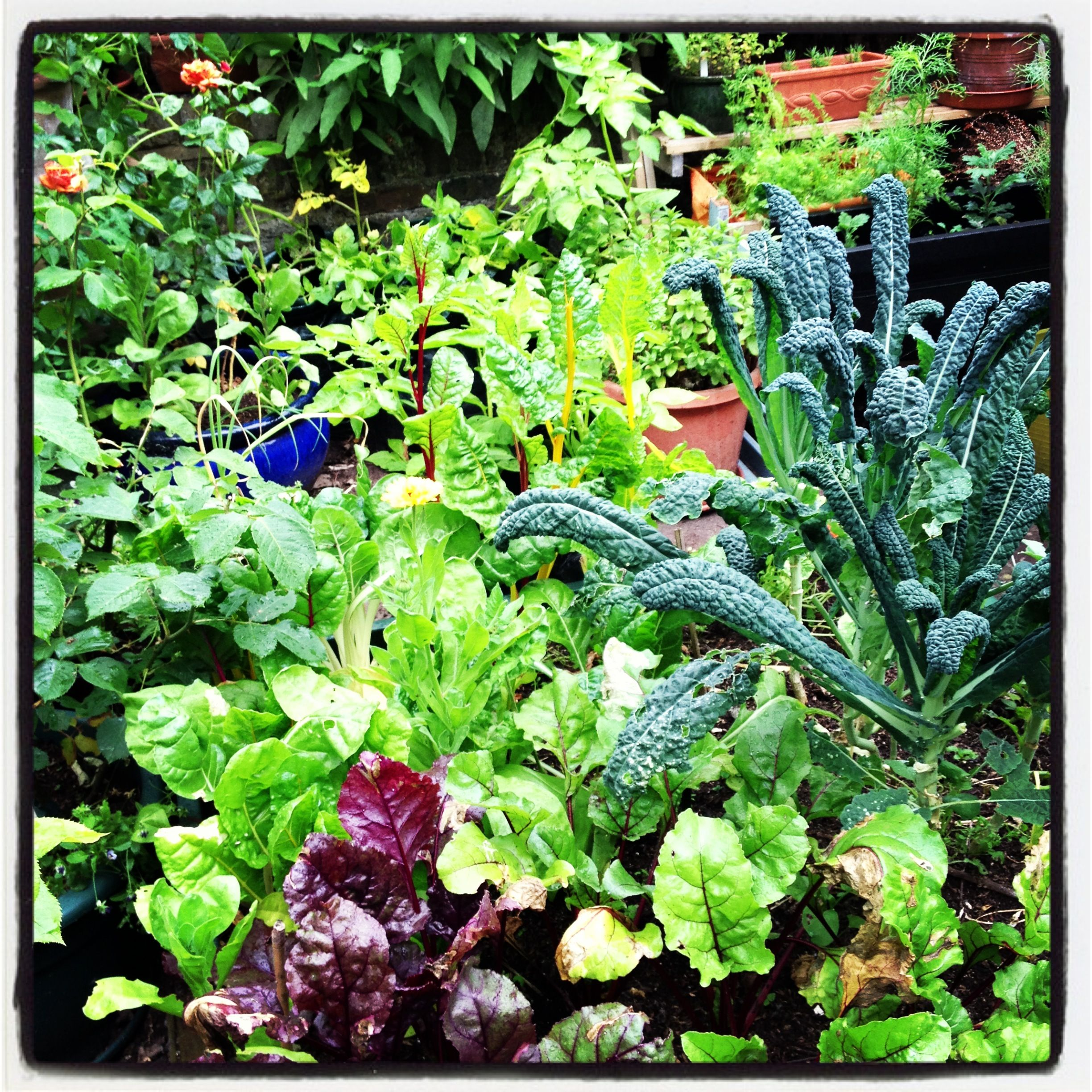 polyculture love it polyculture pinterest