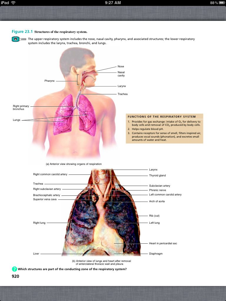 Principles of Anatomy and Physiology, Chapter 23, The Respiratory ...