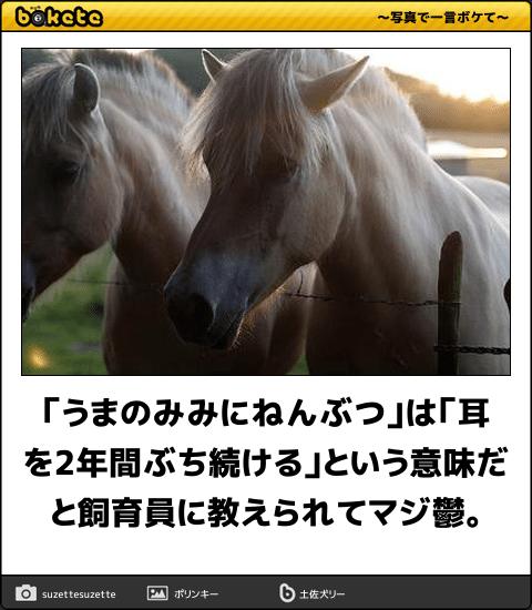 馬鹿馬鹿しいけどウマいこと言う 電車で読んだら危険な馬のボケて 11選 馬 みみ ウマ