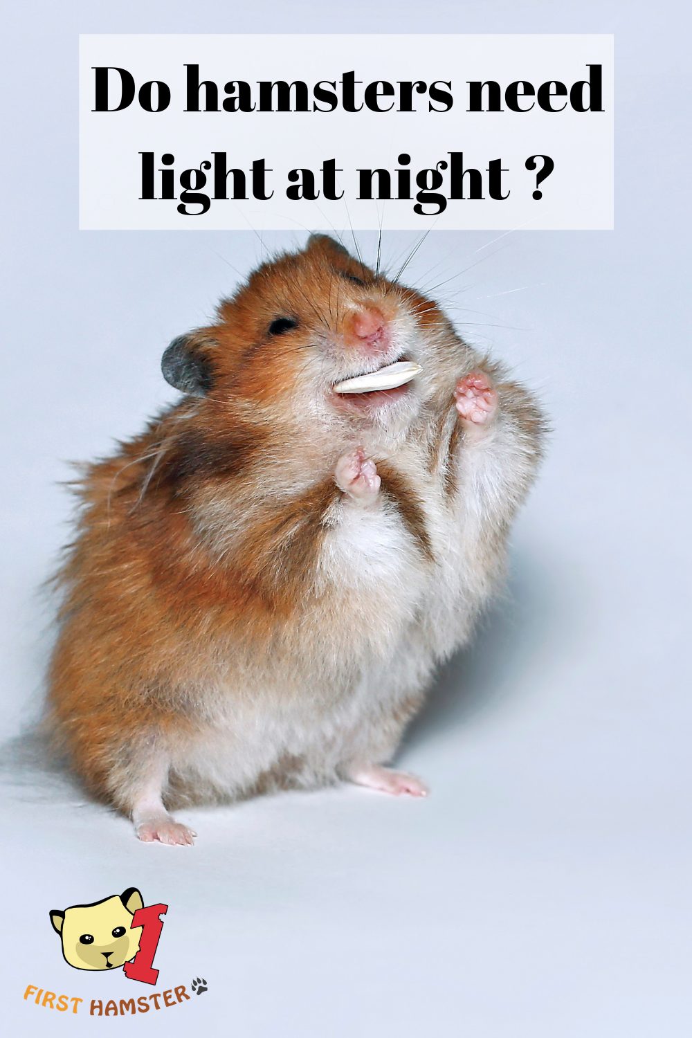 About Hamsters And Light Do They Even Need It To See Hamster Hamster Life Hamster Care