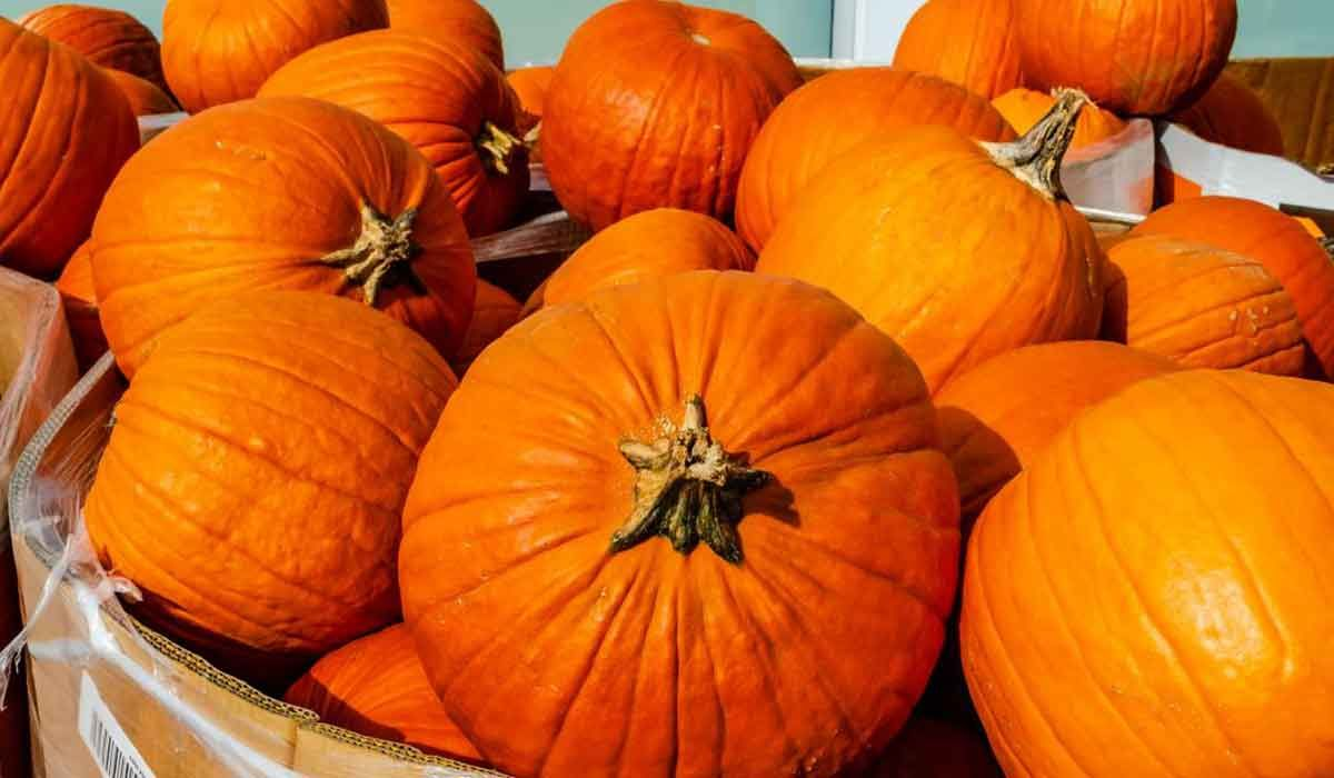 فوائد القرع العسلي لمرضى السكر Pumpkin Food Vegetables