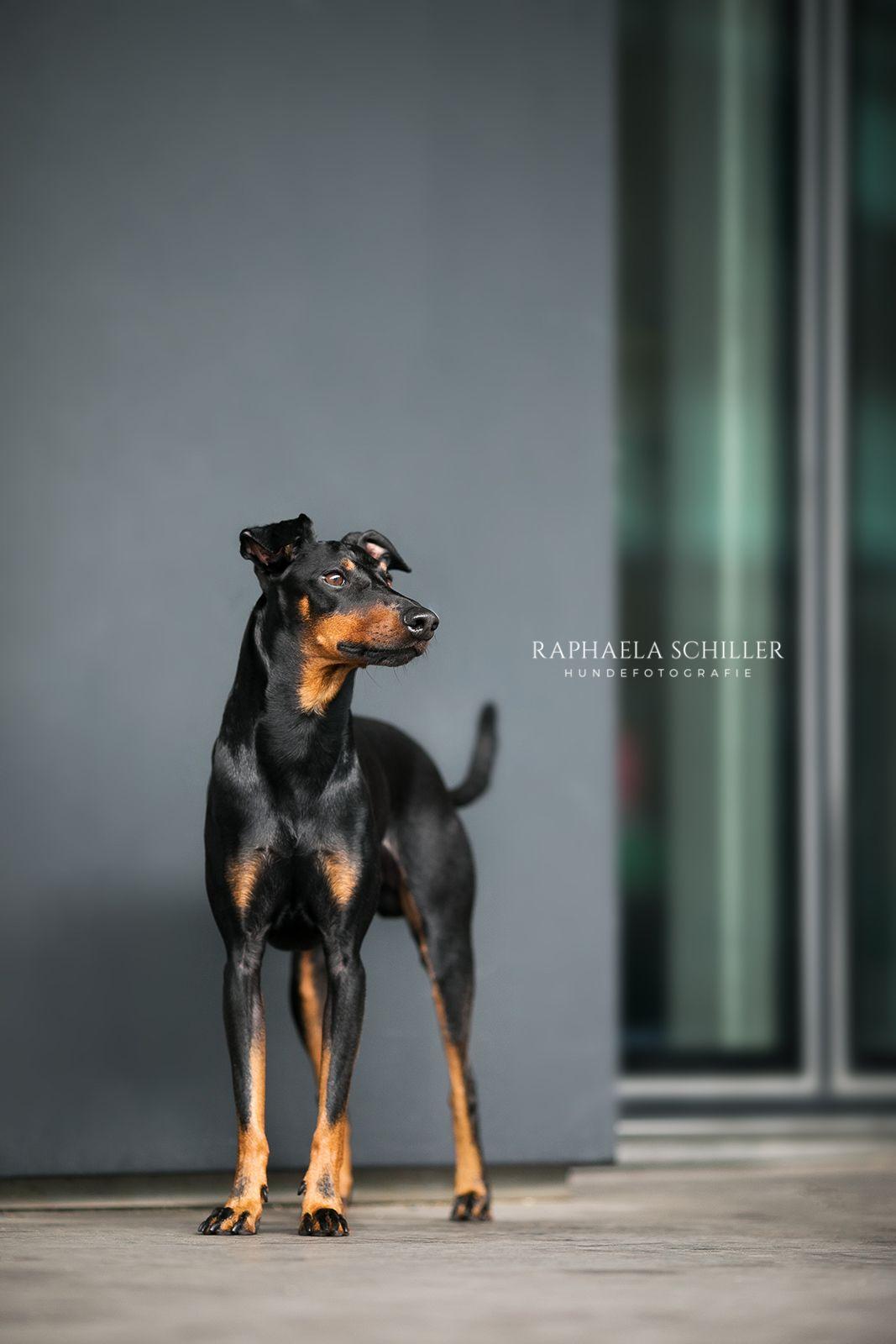Hundefotografie Dog Photography Hundefotografie Fotografie Tierfotografie
