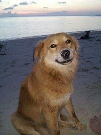Doggy friend in koh phangyan Thailand