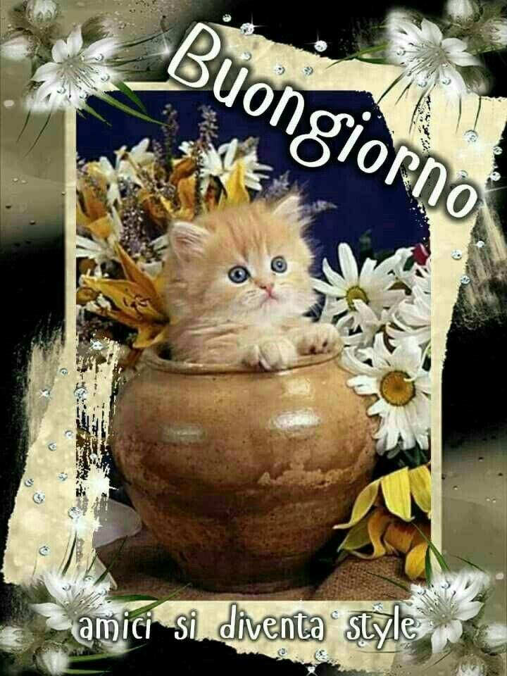 Pin di maria grazia agnoletto su buonanotte pinterest for Buongiorno con gattini