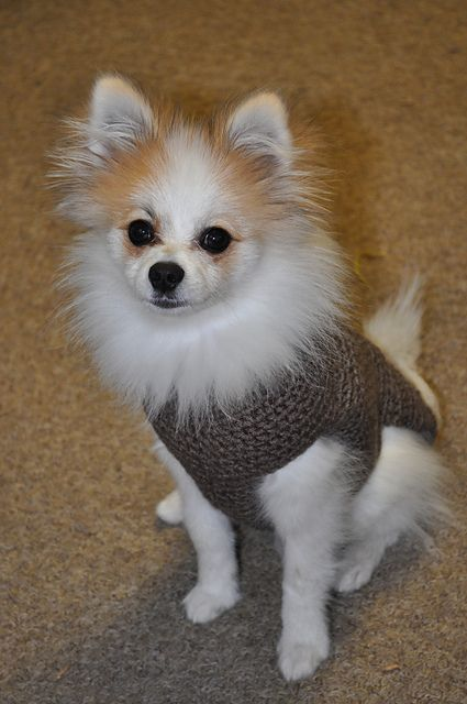 Ravelry: Dog Sweater Tutorial pattern by A Dog In A Sweater ...