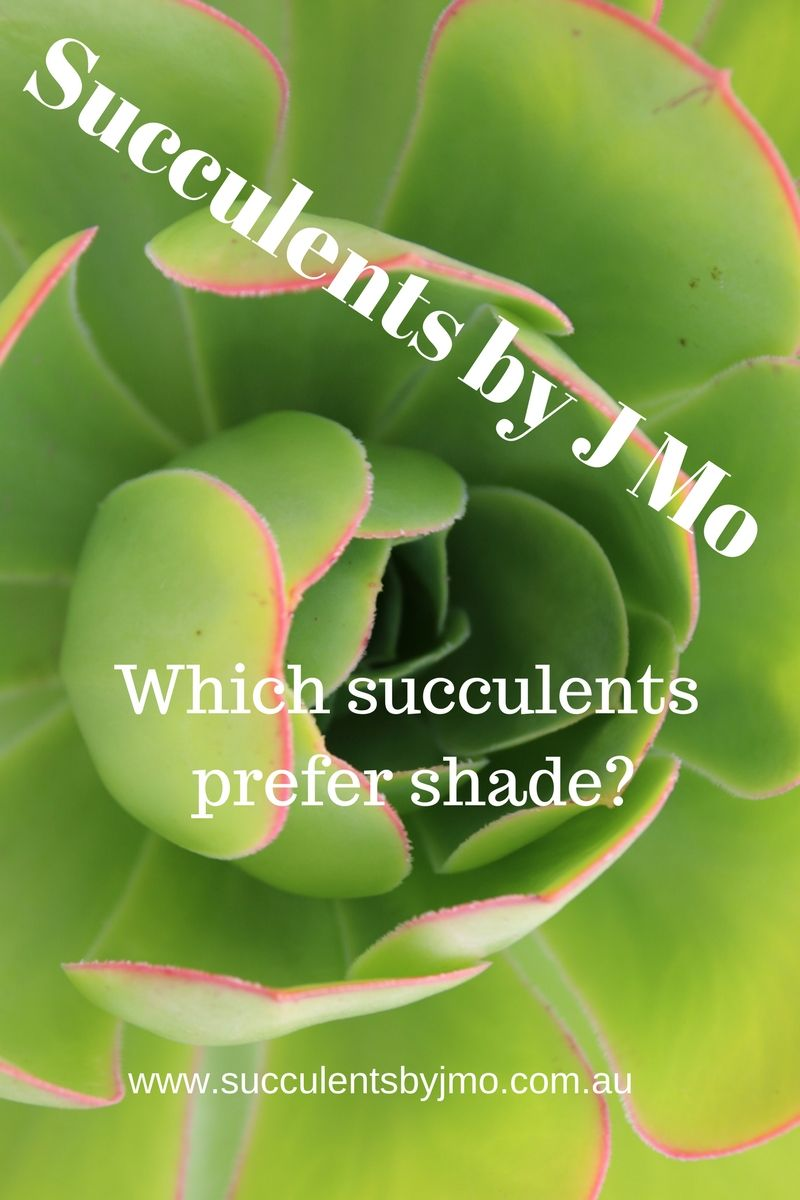 Which Succulents Grow In Full Shade