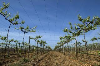 A ViniBrasil foicriada em 2003 com o objetivo de produzir vinhos de padrão internacional, para exportação, a partir do Vale do São Francisco.  Os vinhos Rio Sol, resultado de um projeto inovador e ousado, podem ser encontrados em lojas e supermercados de Londres, Nova York e Tóquio, assim como em qualquer loja da Expand no Brasil.  A ViniBrasil é resultado da audácia de um grupo português que produz e exporta vinhos a Dão Sul.