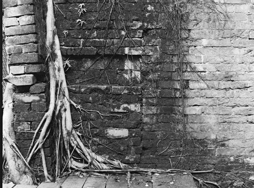 Deep-rooted � Ilford HP5