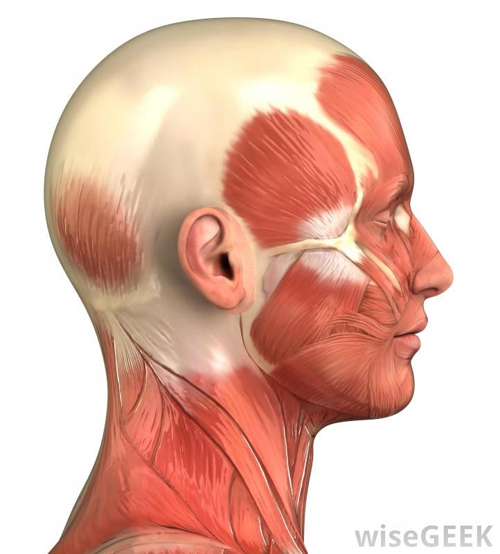 facial muscles and tendons - Google Search | humans ...