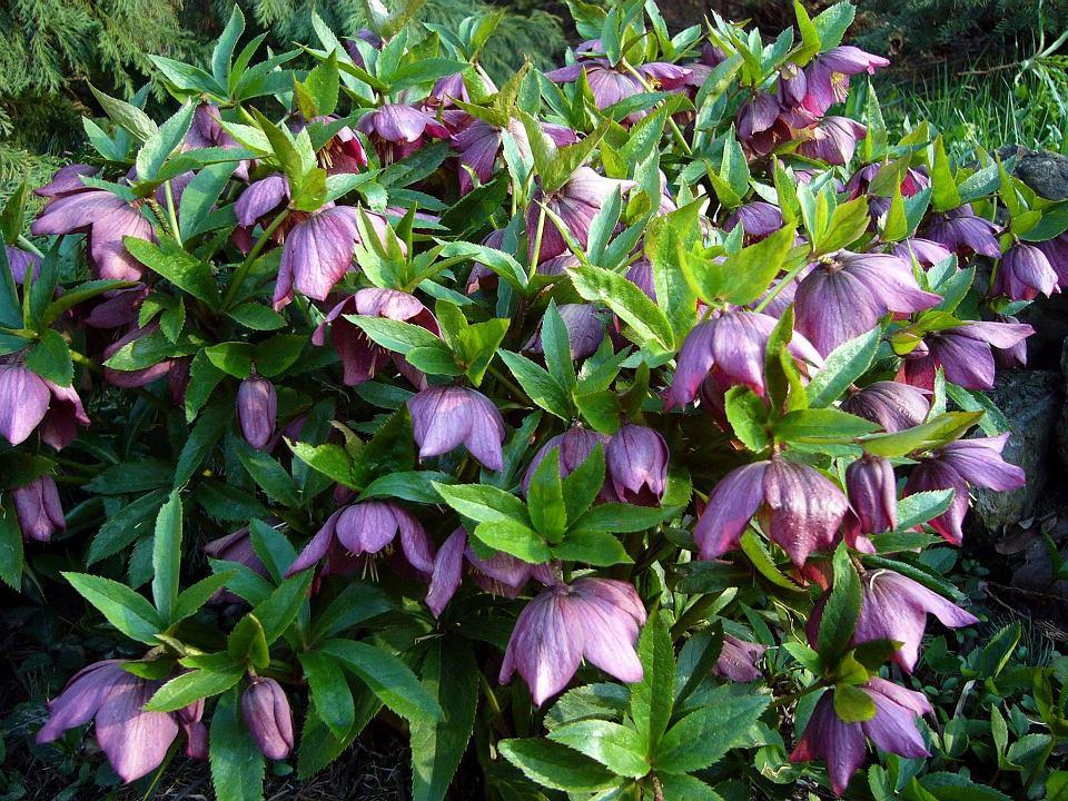 Kwiaty Wieloletnie Jakie Rosliny Wybrac Na Dlugie Lata Plants Garden