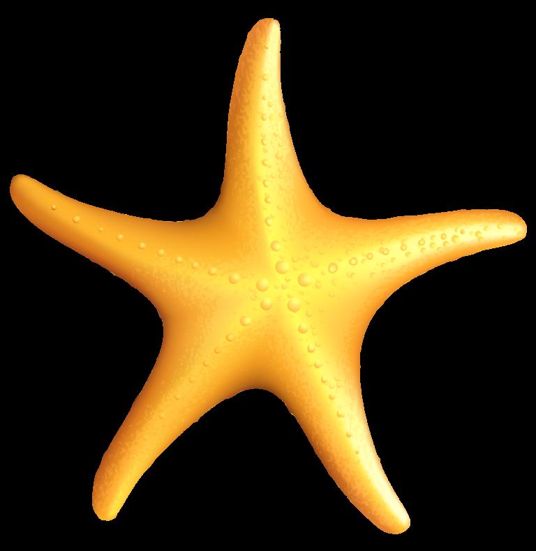 Clipart Images Of Starfish Clip Art Starfish Clipart Starfish
