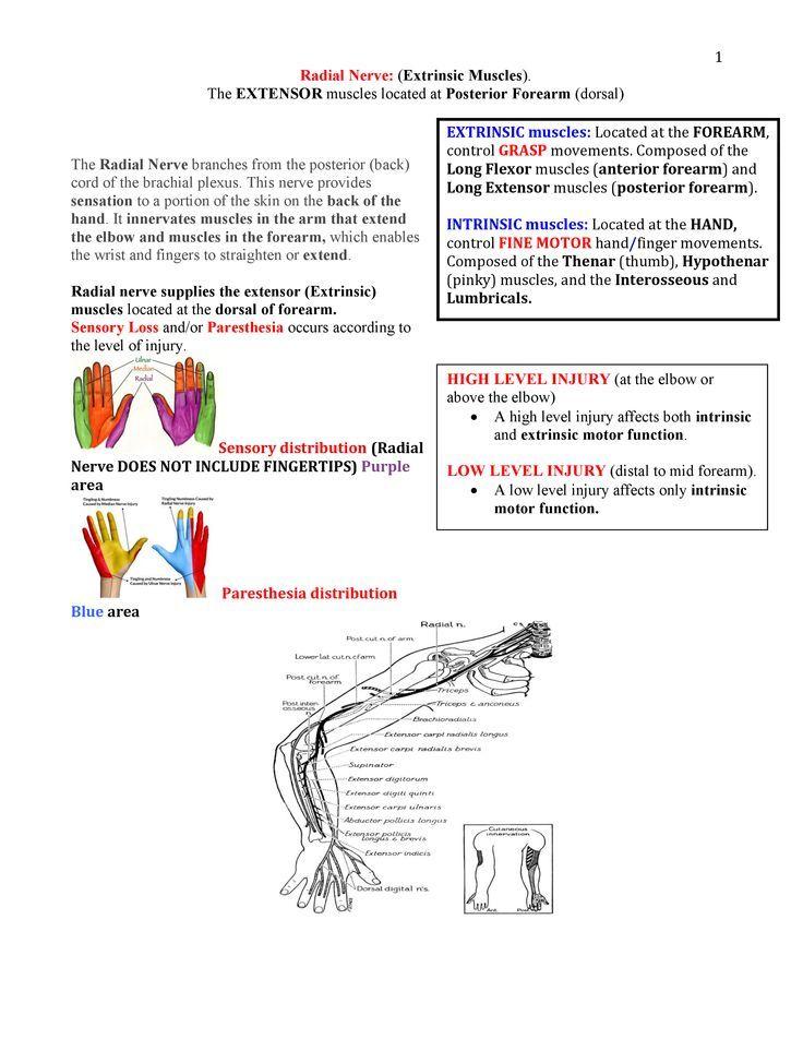 89cdd557ae0c6ac695dcf529a6bb063a.jpg (736×952) | anatomy | Pinterest