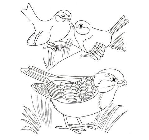 Gorriones Dibujo para colorear | pájaros y aves | Pinterest