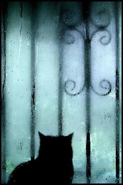 Rainy Day By Charmaine Crazy Cats Cat Art Baby Cats