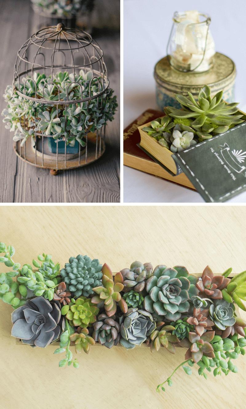 40 Sukkulenten Und Kaktus Ideen Fur Die Hochzeit Hochzeitskiste Sukkulenten Sukkulenten Pflanzen Kaktus Hochzeit