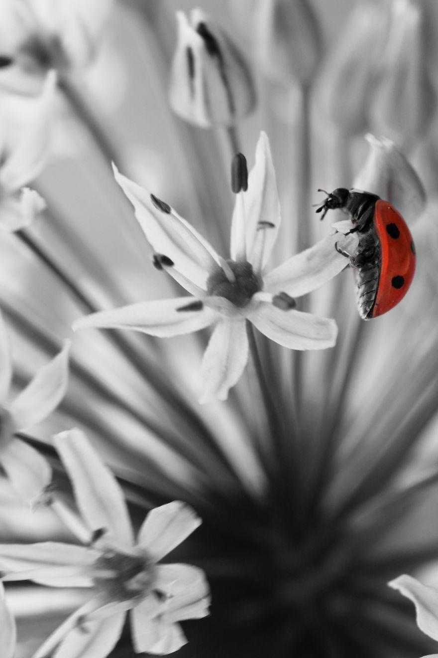 Photo Art, Nature Photography, Ladybug