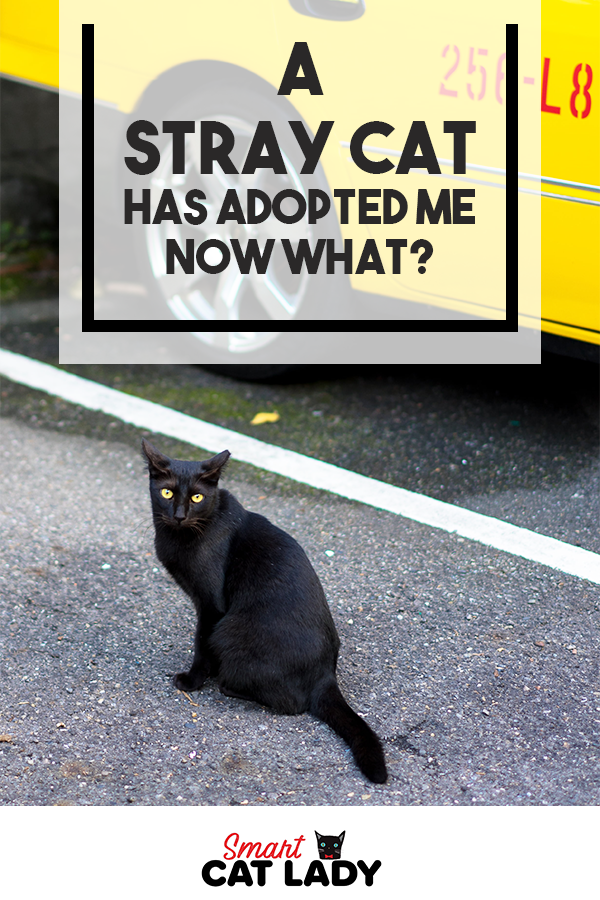 A Stray Cat has Adopted Me. . . Now What! Cats, Cat