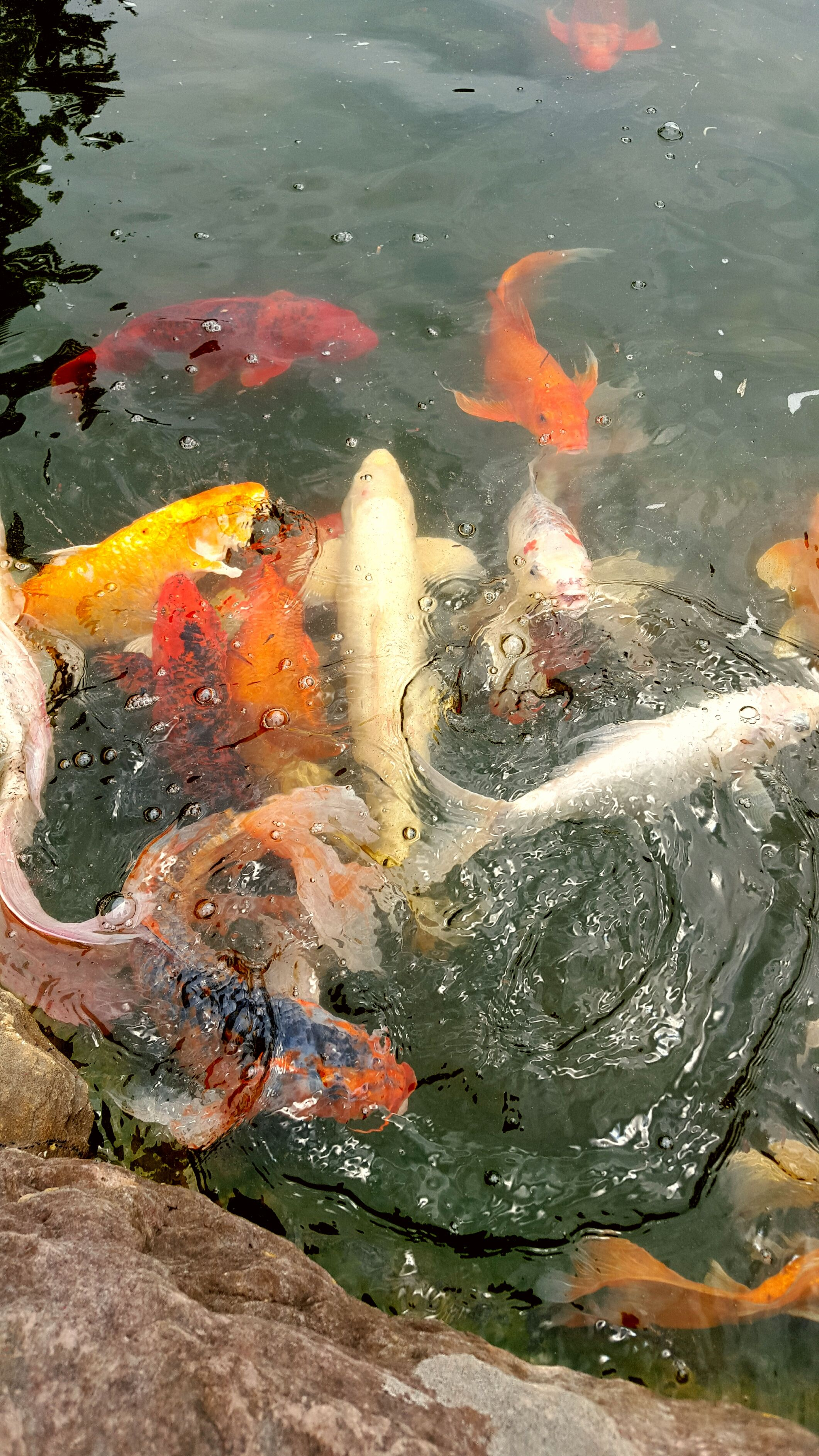 creating a clean healthy pond filled with aquatic life is simple