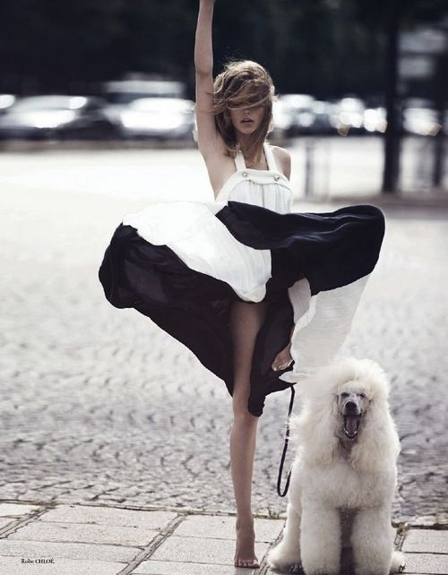 Love the giant poodle!