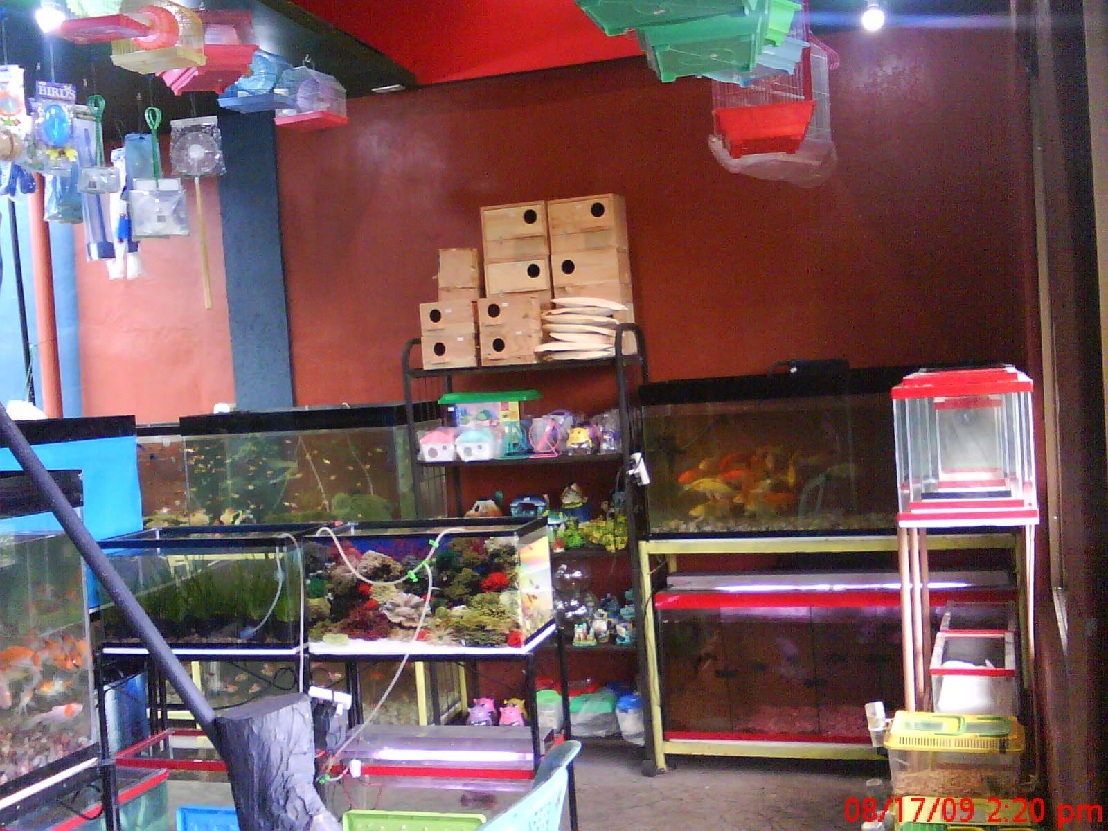 treetop garden petshop  Decor, Pet shop, Home decor